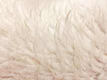Struttura bagnata bianca della pelliccia Fotografia Stock