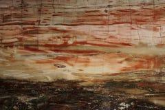Struttura bella dello sfondo naturale del legno petrificato piacevole piacevole di legno petrificato nei colori rossi e gialli Vi fotografia stock