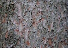 Struttura bella di un albero dell'alta risoluzione immagini stock libere da diritti