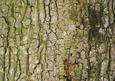 Struttura bella di un albero dell'alta risoluzione immagine stock libera da diritti