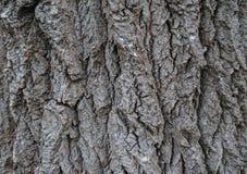 Struttura bella di un albero dell'alta risoluzione immagini stock