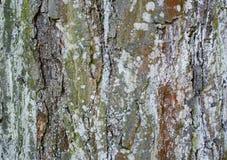 Struttura bella di un albero dell'alta risoluzione fotografia stock