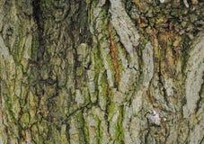 Struttura bella di un albero dell'alta risoluzione immagine stock