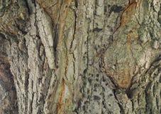 Struttura bella di un albero dell'alta risoluzione fotografie stock