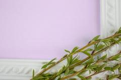 Struttura bianca con i rami del salice verde su un fondo rosa Spazio della copia nel mezzo per il vostro testo fotografia stock