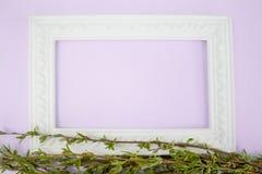 Struttura bianca con i rami del salice verde su un fondo rosa Spazio della copia nel mezzo per il vostro testo fotografia stock libera da diritti