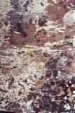 Struttura bianca di lerciume Fotografia Stock