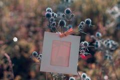 Struttura in bianco che appende sul feverweed su fotografia stock