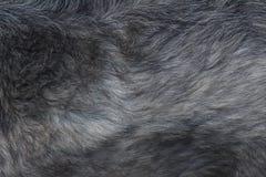 Struttura in bianco e nero dei peli di cane fotografia stock libera da diritti