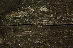 Struttura - bordo di legno Immagini Stock
