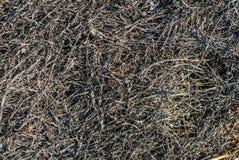 Struttura bruciata dell'erba asciutta Fotografia Stock Libera da Diritti