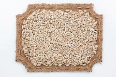 Struttura calcolata di tela da imballaggio con i semi di girasole Fotografia Stock Libera da Diritti