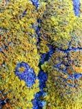Struttura colorata del muschio Immagini Stock Libere da Diritti