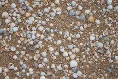 Struttura con le conchiglie e la sabbia Tema della spiaggia Sfondo naturale fotografia stock