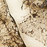 Struttura con le foglie marcie con le fibre Fotografie Stock Libere da Diritti