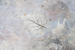 Struttura concreta del pavimento Fotografia Stock