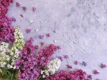 Struttura concreta grigia del fondo del fiore lilla stagionale fotografia stock