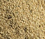 Struttura cruda del riso Fotografie Stock