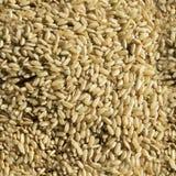 Struttura cruda senza cuciture del riso Fotografie Stock Libere da Diritti