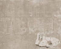 Struttura d'annata con goatling bianco Immagine Stock Libera da Diritti