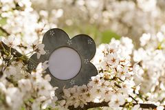 Struttura d'annata della foto con il fiore sakura della ciliegia del fiore Immagini Stock Libere da Diritti