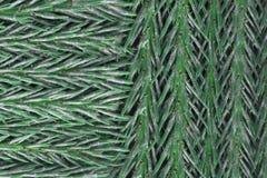 Struttura degli aghi del pino dell'albero di cedro fotografie stock