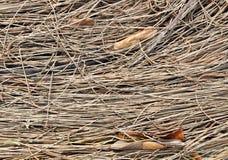 Struttura degli aghi del pino e dei fogli secchi della betulla Fotografia Stock Libera da Diritti