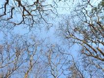 Struttura degli alberi Fotografie Stock