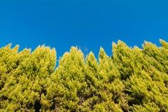 Struttura degli alberi Fotografie Stock Libere da Diritti