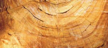 Struttura degli anelli di albero dell'eucalyptus la sezione trasversale Fotografie Stock Libere da Diritti