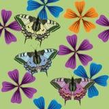 Struttura dei fiori e dei butterflys Reticolo senza giunte Immagini Stock Libere da Diritti