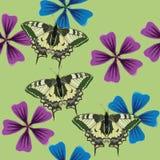 Struttura dei fiori e dei butterflys Reticolo senza giunte Fotografia Stock