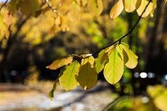 Struttura dei fogli di autunno Fotografie Stock Libere da Diritti