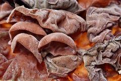 Struttura dei funghi delle orecchie immagini stock libere da diritti