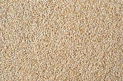 Struttura dei granuli della quinoa Fotografia Stock