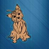 Struttura dei jeans dell'Yorkshire terrier Immagine Stock Libera da Diritti
