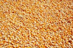 Struttura dei noccioli del seme del cereale Immagine Stock