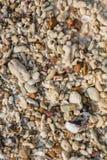 Struttura dei pezzi della pietra e della conchiglia Fotografia Stock