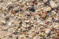 Struttura dei pezzi della pietra e della conchiglia Fotografie Stock Libere da Diritti