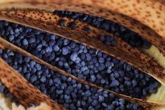 Struttura dei semi di papavero Fotografia Stock