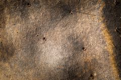 Struttura del bordo di castoro Immagini Stock Libere da Diritti