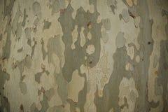 Struttura del cammuffamento della corteccia dell'albero immagini stock