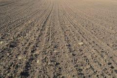Struttura del campo coltivato Immagine Stock Libera da Diritti