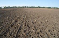 Struttura del campo coltivato, Immagini Stock Libere da Diritti