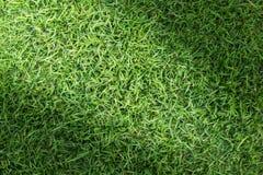 Struttura del campo di erba per progettazione di massima del campo da golf, del campo di calcio o del fondo di sport Immagine Stock Libera da Diritti
