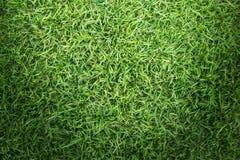 Struttura del campo di erba per progettazione di massima del campo da golf, del campo di calcio o del fondo di sport Fotografia Stock Libera da Diritti