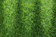 Struttura del campo di erba per progettazione di massima del campo da golf, del campo di calcio o del fondo di sport Immagini Stock