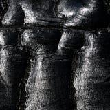 Struttura del carbone di legna Fotografia Stock