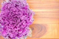 Struttura del cavolo colourful di porpora della riccio-foglia Fotografia Stock
