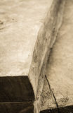 Struttura del ceppo Fotografie Stock Libere da Diritti